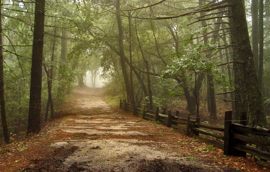Foggy Muddy Road by Daniel Hoherd
