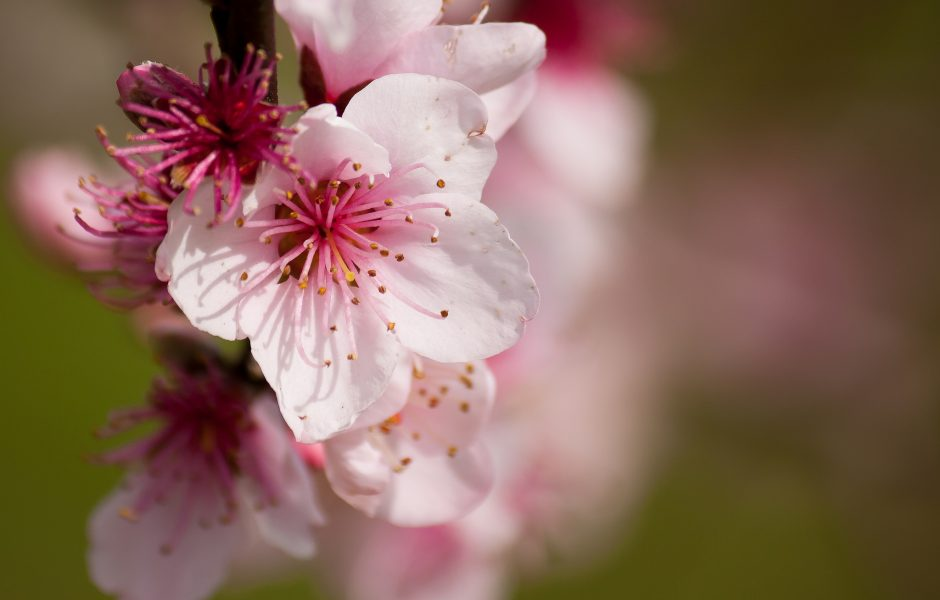 Blossom by Skeptical View