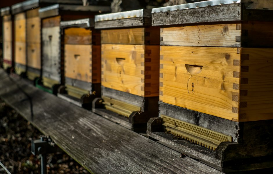 Beehives by Franz Jachim.