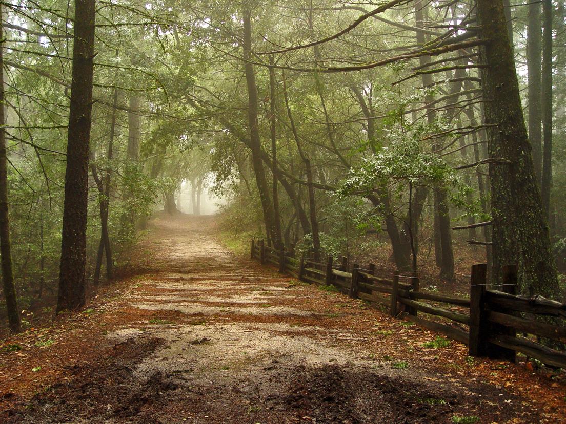 Foggy Muddy Road by Daniel Hoherd