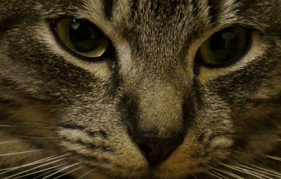 Cat by Alina Sandu