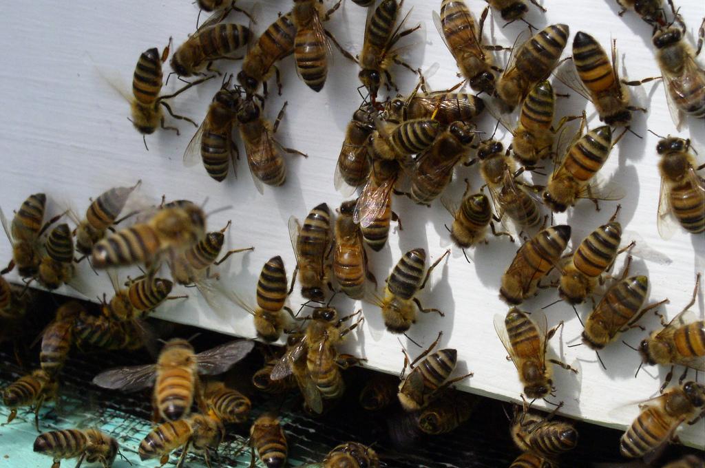Bee Hive by Rebecca Leaman.