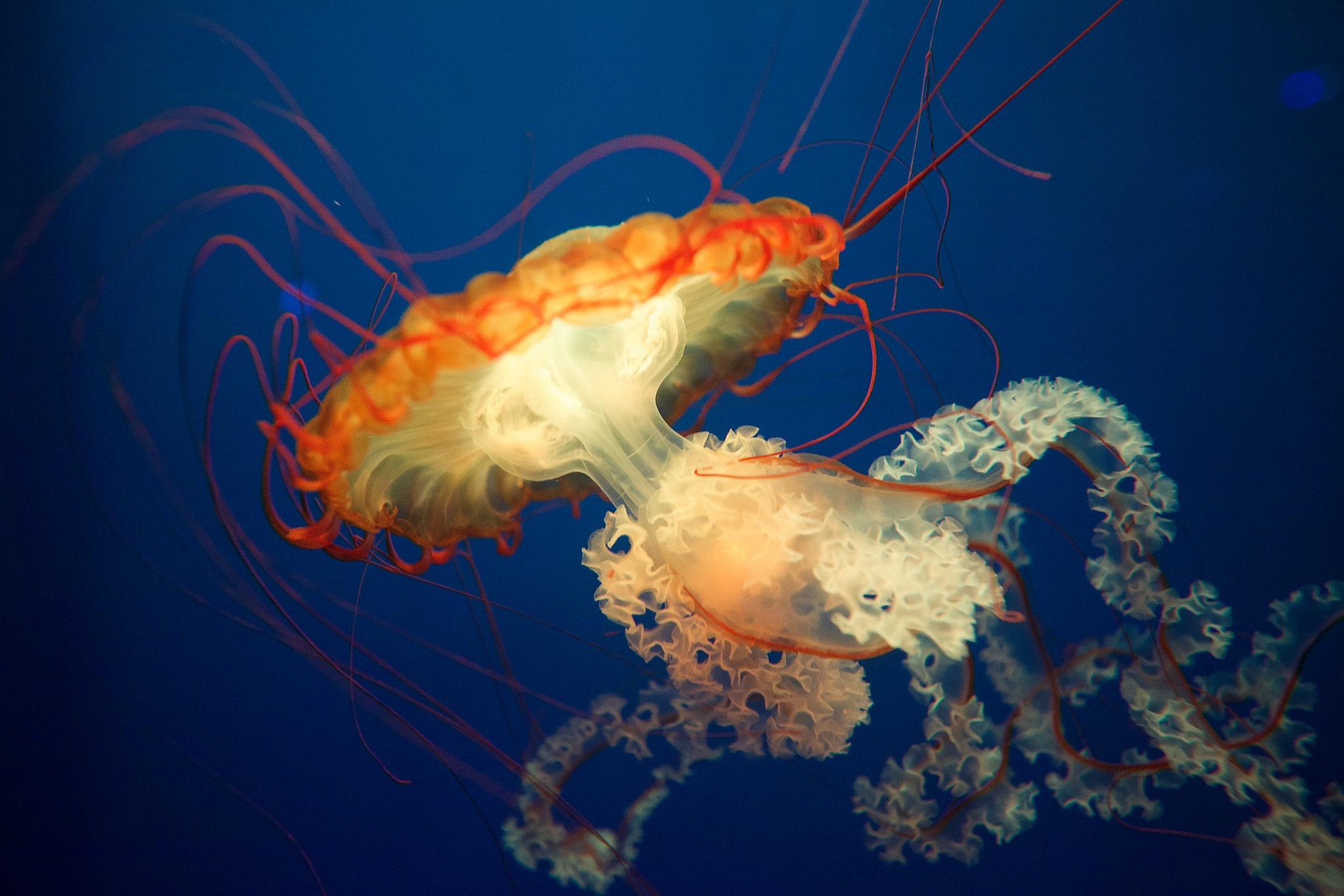 Jellyfish by Aurelien Guichard.