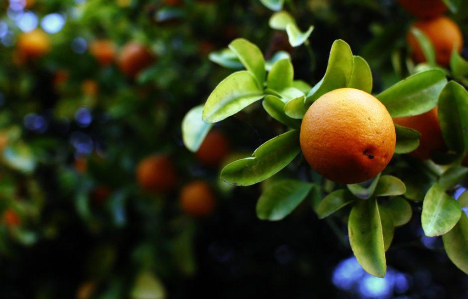 Orange by Rafael Castillo.