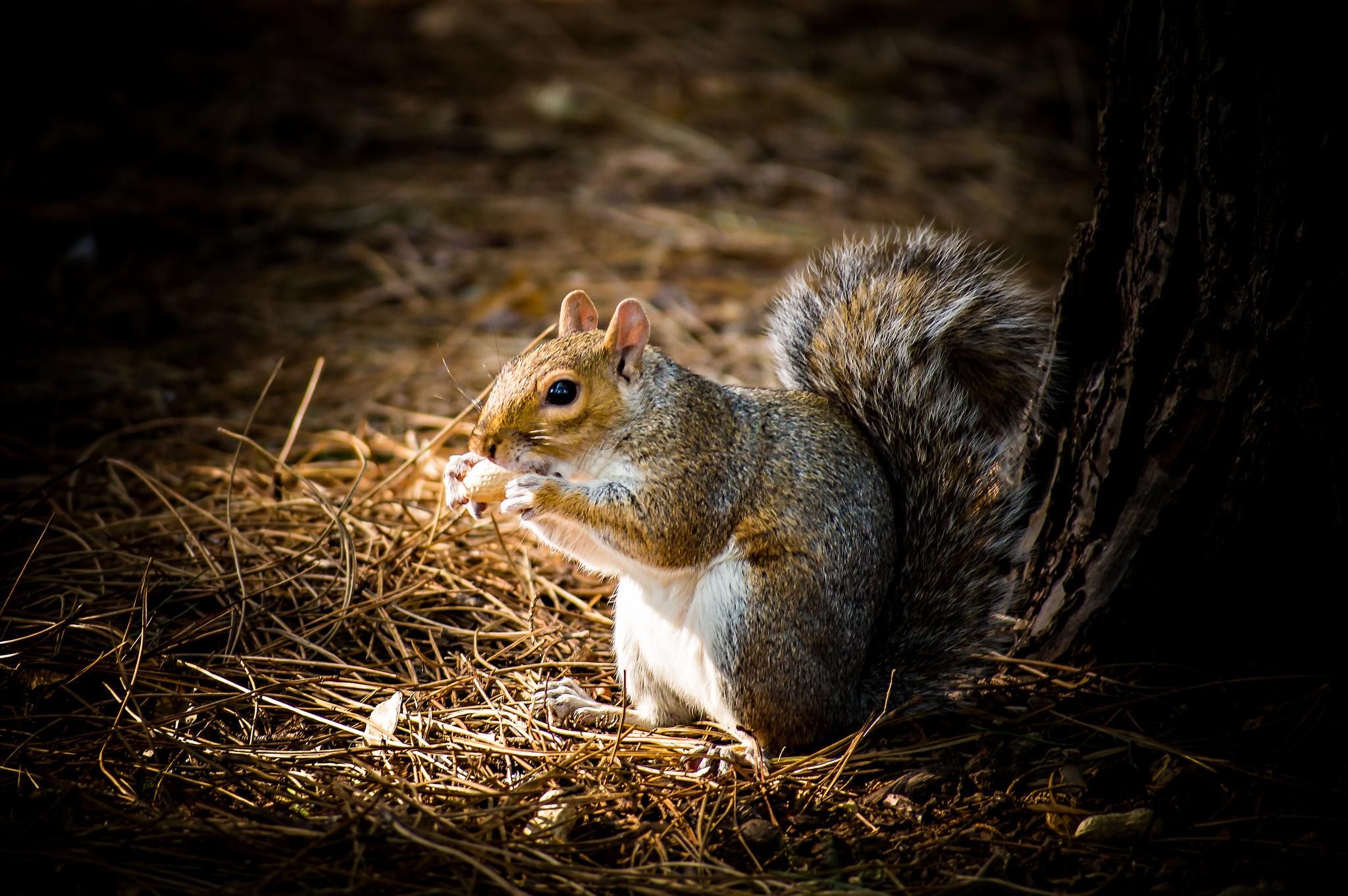 Squirrel by Philip Money.