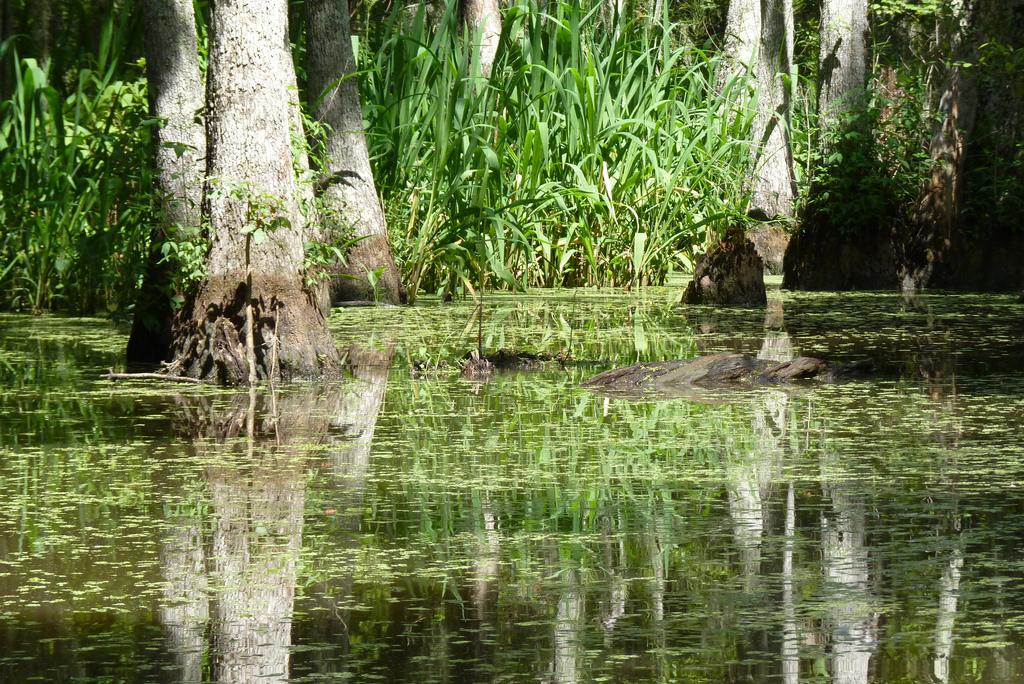 Swamp by ctj71081.
